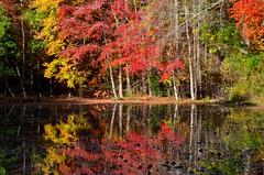 Reflecting on Fall (Darren-) Tags: trees newyork color reflection fall nature beautiful landscape harbor longisland lloyd blinkagain nikond5100