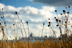 The Brownlands (Andy Marfia) Tags: flowers autumn plants brown chicago fall grass dead iso200 lakemichigan f5 lakefront birdsanctuary montrosepoint d7100 13200sec