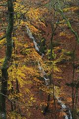 Ninglinspo (Ruddy Cors) Tags: longexposure autumn water forest automne river nikon eau stream rivire fort torrent fil poselongue d300s