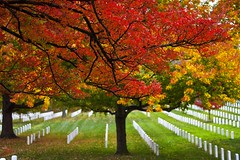 The colours of autumn (Ausamah) Tags: autumn trees red orange woman usa man sexy green art fall nature beautiful cemetery graveyard leaves yellow sex stone infantry arlington dead soldier photography death virginia photo dc washington bahrain amazing nice war branch colours peace force gulf place purple head military air rip headstone tomb tombstone navy arab fallen seals rest marines resting martyr airforce veteran officer    ausamah alabsi