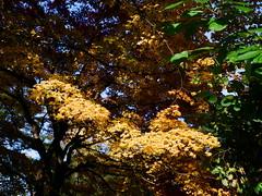 _15 (Taiwan's Riccardo) Tags: color japan sapporo hokkaido 120film negative bronica   fujifilm fixed f4 65mm hokkaidouniversity rf645  pro160ns bronicalens 2013hokkaidovacationoctober31 2013hokkaidovacation