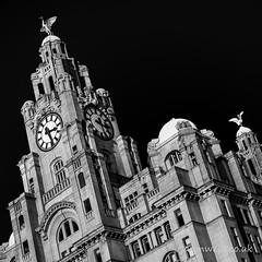 Royal Liver Building (wellsie82) Tags: city white black building monochrome architecture liverpool canon photography eos mono blackwhite waterfront unescoworldheritagesite unesco threegraces liverbird pierhead 6d merseyside jasonwells liverbuilding royalliverbuilding rivermersey 24105mm bestcapturesaoi wellsie82 wwwjasonwellscouk jasonwellscouk