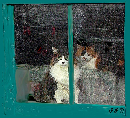 Chats dans la Fenêtre--Cats in  the Window