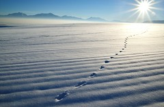 Tracks in a Snow Covered Field (JasonCameron) Tags: winter white lake snow mountains cold field utah smog december air salt tracks powder dirty deer pollution valley inversion
