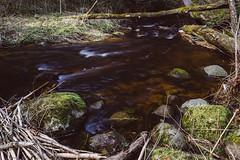 In the Woods(03.23) (AlanScerbakov) Tags: flowers water landscape rocks slow shutter silky alanscerbakov