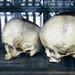 Museo Anatomía craneos
