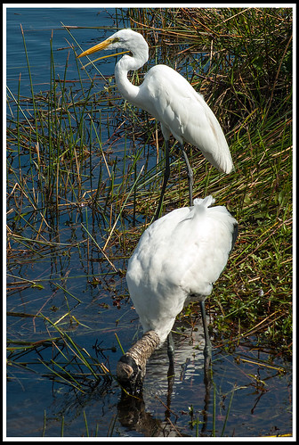 "Egret-and-Stork • <a style=""font-size:0.8em;"" href=""http://www.flickr.com/photos/21237195@N07/14290429721/"" target=""_blank"">View on Flickr</a>"