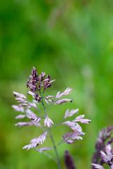 Grass portrait