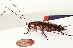 شركة مكافحة صراصير بجدة (شركة مكافحة حشرات بجدة) Tags: cockroaches صراصير حشرات
