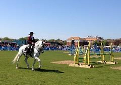 Bank Holiday sunshine? (larigan.) Tags: horse sunshine spanish horseshow rider bankholiday bexhillonsea larigan phamilton polegrove iphone4s