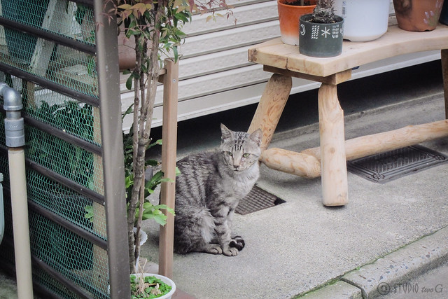 Today's Cat@2013-07-02