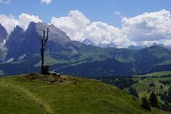 Südtirol_2013_073 (AndiP66) Tags: italien italy mountains alps berge di alm alpen alto alpe südtirol southtyrol adige siusi northernitaly seiser norditalien andreaspeters