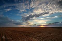 Ode aux moissons (photosenvrac) Tags: photo champs culture ciel nuage cereales coucherdesoleil beauce moisson couchersoleil thierryduchamp