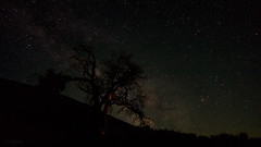 Craters of the Moon Night (Ben Chase Photography) Tags: tree night stars solitude peace nobody idaho astrophotography serenity cratersofthemoon milkyway