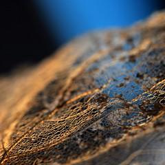 Arsenic et vieilles dentelles (4) (Anne*°) Tags: ©annedhuart 2013 arsenicetvieillesdentelles dentelle dof feuille focus lace leaf light lumière macro decomposition série intertwining entrelacs annedhuart