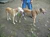 GreyhoundPlanetDay2008011