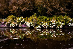 Galicia. (Elena Fernndez Gonzlez.) Tags: naturaleza flores verde azul lago agua lila magia