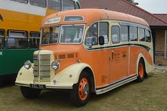 Shamrock & Rambler (hotspur_star) Tags: shamrockrambler kel94 bedfordobduple altonbusevent2013