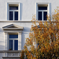 Window View (AnyMotion) Tags: autumn windows plants white tree fall window nature colors yellow architecture facade automne germany square gold colours view frankfurt fenster herbst natur pflanzen gelb architektur otoño birch baum fassade farben birke weis anymotion 2013 1280x1280 canoneos5dmarkii frankfurtnordend 5d2
