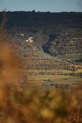 sfumature (formicacreativa) Tags: panorama verona sentiero castello collina montorio passeggiata viti vigneti sanfidenzio stradaforestale fortepreara johnpreara