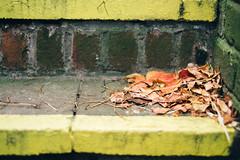 (Paul J Coles) Tags: uk england urban corner xpro fuji path decay tunnel surrey fujifilm guildford fujinon xf35 xpro1 vsco vscofilm