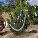 Trees_of_Loop_360_2013_133
