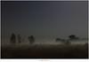 De sterrenhemel (5D317383) (nandOOnline) Tags: mist nevel nacht nederland natuur avond hemel heide landschap strabrechtseheide ster sterren mierlo sterrenbeeld maanlicht nbrabant