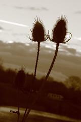 51st Sunday sunrise 2013 (thewisitmaster) Tags: sunrise hill locks devizes caen 2013