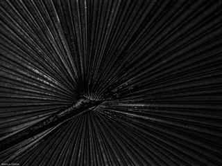 Palmengarten 13