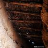 Palomar 45. Villarrín de Campos. 05 (SOSpalomares) Tags: palomar zamora tierradecampos villarríndecampos sospalomares