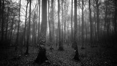 Blair Witch (vulture labs) Tags: trees blackandwhite bw mist art nature monochrome fog nationalpark croatia monotone monochromatic blair plitvice withch vulturelabs