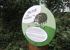 PG Woodlouse - Llanyrafon bug Trail