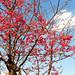 Nikon S3100 Sakura B