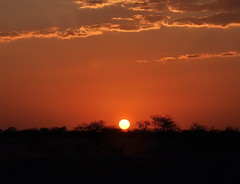 Only in Africa [Explored] (The Spirit of the World ( On and Off)) Tags: africa sunset red sun sunlight night landscape nationalpark bush brush namibia etosha southernafrica africasunset nationalparkofnamibia