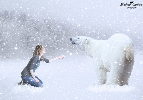 bear white selfportrait snow oso fantasy polar