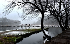 Trees  (Mel s away) Tags: life china bridge people dog mountain snow reflection tree water weather rural mirror countryside cow village folk country mel farmer melinda zhejiang  chanmelmel