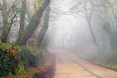 Misty Morning (midlander1231) Tags: trees mist nature misty forest landscape spring woods springtime