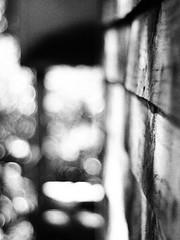P4162087 (imageedit) Tags: blackandwhite bokeh lenses jupiter8 russianlens filmeffect olympusep1 silentmb