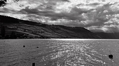 Ombres et brillances (Diegojack) Tags: paysages cully noirblanc contrastes lavaux