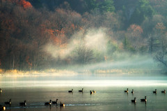 The mist guardians of the forest lands (Captions by Nica... (Fieger Photography)) Tags: forest foliage fog foggy mist misty landscape lake water flockofbirds birds geese outdoor autumn nature fall fallfoliage quebec canada serene sunrise