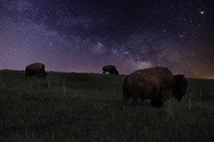 Where The Buffalo Roam (Judd515) Tags: astrophotography animal astrology bison buffalo country d7000 gravelroads iowa sky longexposure midwest milkyway nikon nature nightphotography nightsky nightscape night outside outdoors prairie rural rurex stars vibrant wildlife
