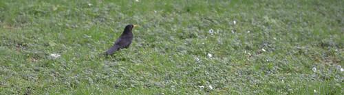 Blackbird WL FRA 5-21-16 1