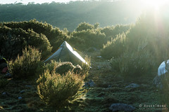 20170302-06-Campsite (Roger T Wong) Tags: australia greatpinetier np nationalpark sel70300g sony70300 sonya7ii sonyalpha7ii sonyfe70300mmf2556goss sonyilce7m2 tasmania wha wallsofjerusalem worldheritagearea bushwalk camp hike tent trektramp walk