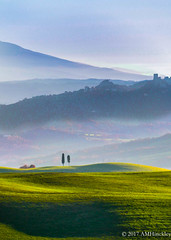 Standing Side by ide (angela.hinckley) Tags: tuscan landscape plants nature italy italia camerawest vluxleica light textures trees pienza tuscany leica tuscana leicacamera toscana themes zzinternational texture fog vluxvluxplaceshillsv luxcamera westcamerawestfogitaliaitalyleicaleicacamerapienzaplacesplantstexturesthemestoscanatreestuscantuscanatuscanyv lux hills vluxvlux places