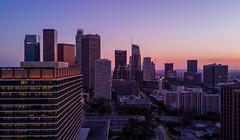 Downtown Los Angeles, Skyline from Bunker Hill (STERLINGDAVISPHOTO) Tags: losangeles downtownlosangeles downtownla bunkerhill dwpbuilding johnferrarobuilding skyline skyscraper sunset aerialphotography