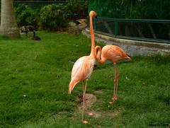 Parque Zoológico El Pinar (MariaTere-7) Tags: animales flamencos aves zoológico el pinar caracas venezuela maríatere7