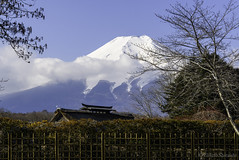 Mt. Fuji (eliseteshiraishi) Tags: asiancontinent background japan landscape minamitsurudistrict mountfuji mountain nihon noperson oshinohakkai oshinohakkaivillage sakura shibokusa unescoworldheritage unescoworldheritagejapan village vividcolors whitesnow winter yamanashiprefecture colorful daytime fujisam galhos japanculture leaves march2017 montanha montefuji nature outdoor paisagemdeinverno scenario scenary snow traveldestination trees vacation vision volcanic volcano vulcão wintersnow árvores フジサン 世界文化遺産 世界遺産 冠雪 名所 富士山 山 山梨県 山麓 忍野八海 忍野村 日本 日本の風景 日本一の山 日本家屋 早朝 晴れ 朝 空 自然 観光地 雪 雪景色 青空 青色 風景 minamitsurugun yamanashiken japão