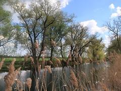 Spaziergang entlang der Riß in Baden-Württemberg (frenziM) Tags: landscape germany deutschland landschaft paysage allemagne naturalmente