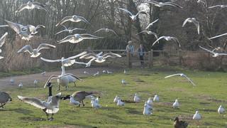 Bird mob