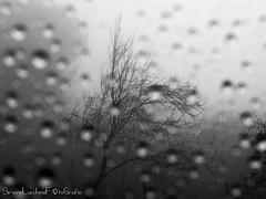 RainyDay (frillicca) Tags: 2017 albero bn bw biancoenero blackandwhite drops fog gocce march marzo monochrome monocromo montefiasconevt nebbia panasoniclumixlx100 pioggia rain tree